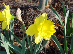 Spring Flower Pictures Three March 2007 026